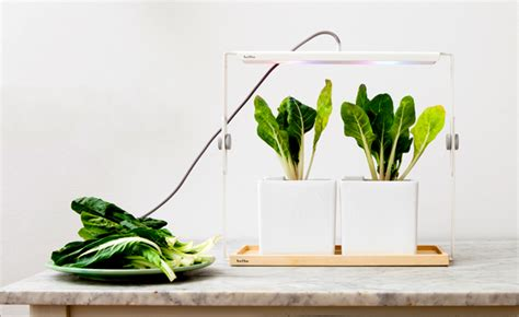 lights for growing plants indoors design centric indoor plant lights for living