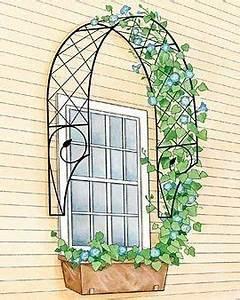 Rankhilfe Für Zimmerpflanzen : rankhilfe f r den efeu rundherum ums fenster sommer im garten garten ideen garten und ~ Yasmunasinghe.com Haus und Dekorationen