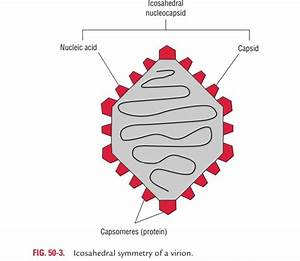 Structure And Symmetry Of Virus