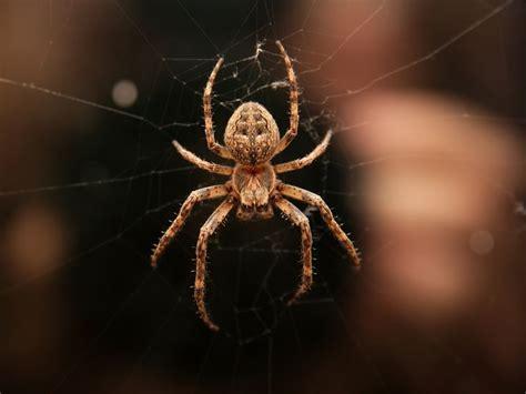 13 Best Spider Webs Images On Pinterest