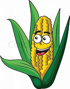 Fresh happy healthy corn on the cob with green leaves and ...