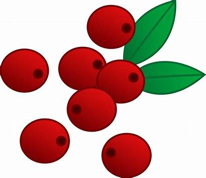 Cranberry Berries Cranberries Clipart Berry Clip Vector