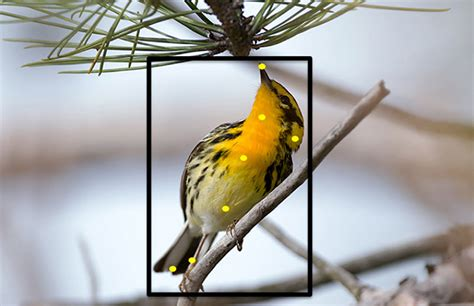 cornell s website can id bird species through photos