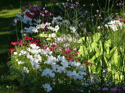 Vasaras puķes - Raksti - corylus