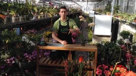 orchid 233 es comment entretenir faire fleurir et refleurir www jardinerie glomot fr
