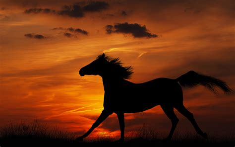 horse backgrounds cool wallpapers desktop computer wallpapersafari fire