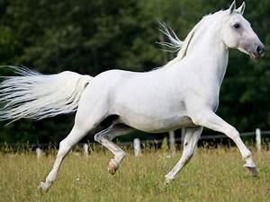 Can You Name Th... Horse Breeds