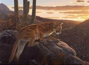 As Darkness Falls - cougar - puma - mountain lion ...