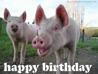 Birthday Happy Pig Funny Animal Farm Animals