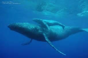 クジラ:画像 : 【画像・動画】ひたすらクジラのかっこ良さが分かる ...