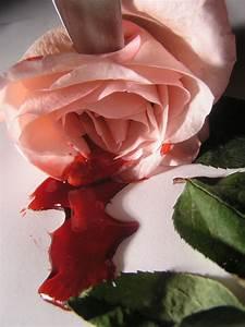 Free bleeding roses 10 Stock Photo - FreeImages.com