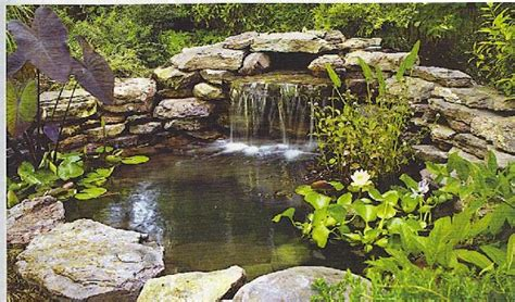 Water Gardening  It's So Fun!  Evergreen Of Johnson City, Tn