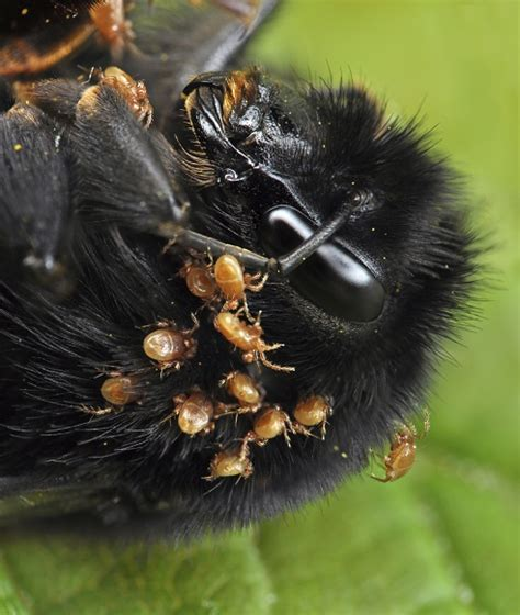 Do it yourself pest control solutioingenieria Choice Image