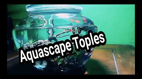 membuat aquascape mini ukuran cmgp mp mp
