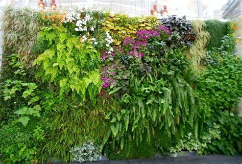 Best Vertical Garden by 10 Best Vertical Garden Plants With Care Tips Gardenoholic