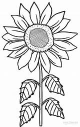 Coloring Pages Sunflower Printable Flower Sunflowers Template Pattern Stencil Sketch Cool2bkids Drawing sketch template