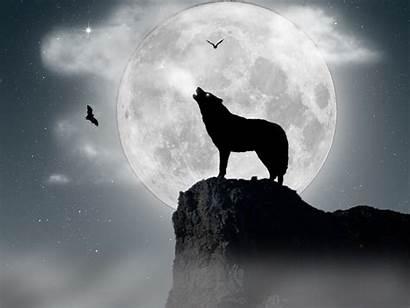 Moon Wolf Howling Wallpapersafari