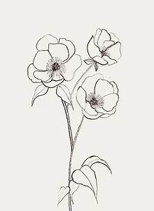 Best 25+ Flower drawings ideas on Pinterest | Flower ...