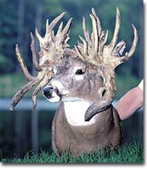 Whitetail Deer Shedding Velvet by 1000 Images About Skulls Skeletons Etc On Pinterest