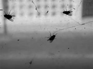 Viele Fliegen Am Fenster : die fliegen am fenster youtube ~ Orissabook.com Haus und Dekorationen