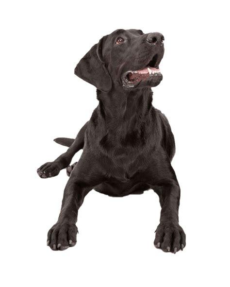 hundefutter test vergleich hundefutter vergleichde