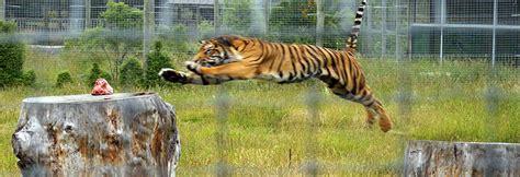 orana wildlife park christchurch halal trip