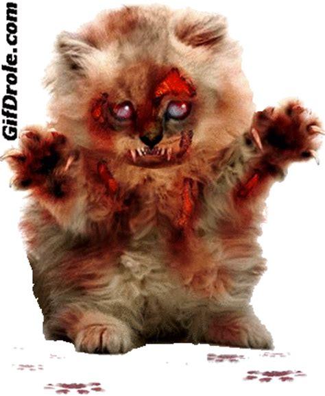 gif chaton zombie horrible qui revient de parmi les morts