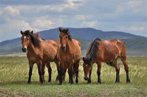 horse horses herders early pasture kazakhstan domesticated researchers study western botai steppe husbandry advertisement