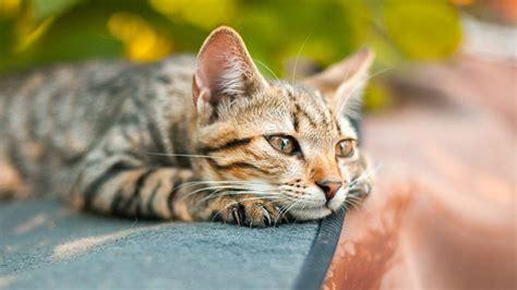 durchfall bei katzen ursachen und massnahmen mera