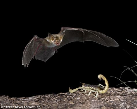 sharing planet with animals how do bats hunt at night