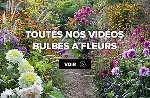 Bulbes D été : bulbes floraison d 39 t et d 39 automne ~ Melissatoandfro.com Idées de Décoration