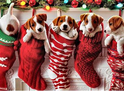 Christmas Puppy Dogs Animals Holiday Pet Cats
