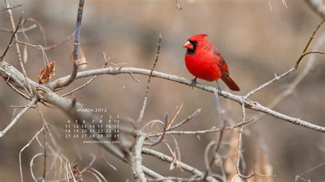 march  desktop wallpaper calendar cardinal color