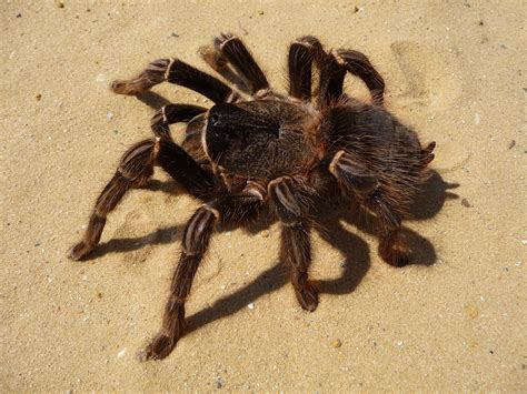 Gambar : hewan, serangga, fauna, invertebrata, labah-labah ...