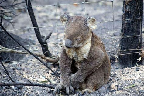 heatwave threatens australias wildlife  green journal au