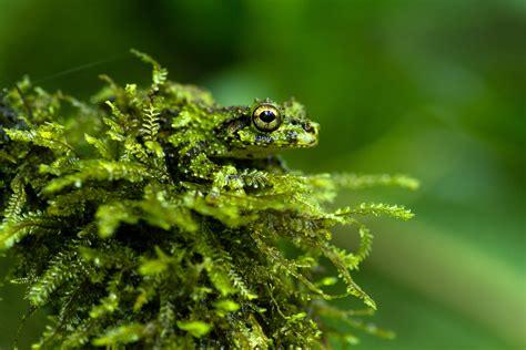 Evolutionary biology   Royal Society