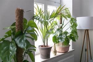 Pflanzen Für Innen : pflanzen f r innen die sch nsten einrichtungsideen ~ Michelbontemps.com Haus und Dekorationen