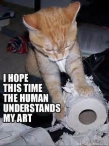 hilarious cats cat pictures with captions 1