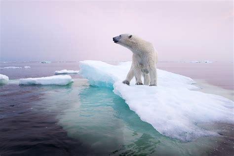 Global Warming Effects On Animals Wwwpixsharkcom