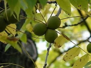 Arbre A Fruit : images gratuites arbre branche fruit lumi re du soleil feuille fleur aliments vert ~ Melissatoandfro.com Idées de Décoration