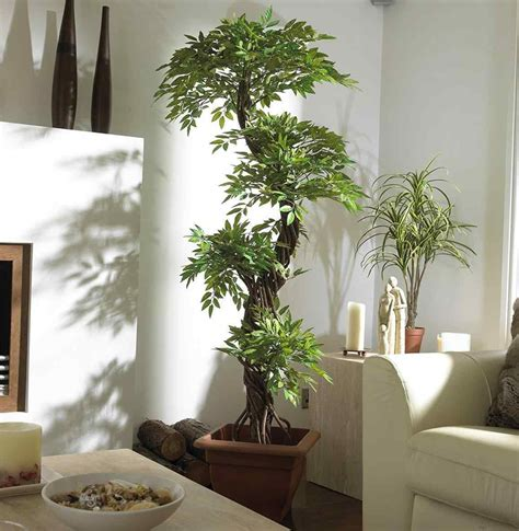 Low Light Indoor Trees by Indoor Trees Breakpr