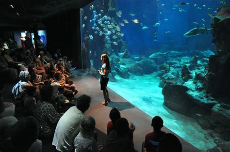 aquarium mare nostrum dehors les petits