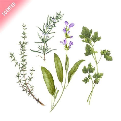 bouquet garni cuisine 54 best symbols and langages images on