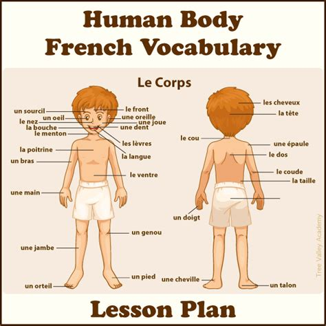 body parts  french lesson plan  kids tree valley