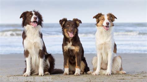 chien sun wallpaper sea dog chien sun dogs bordercollie