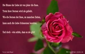 Blume Der Liebe : hochzeitsgedichte gedichte und spr che zur hochzeit ~ Whattoseeinmadrid.com Haus und Dekorationen