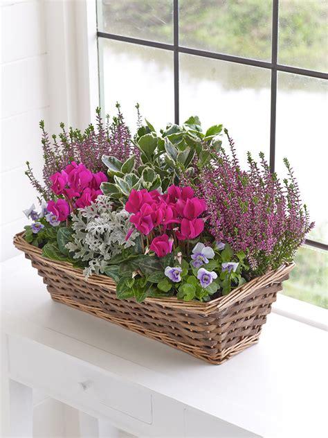 autumn window box interflora container gardening