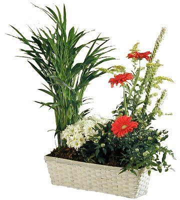 pot et fleur plant arrangement in country basket netc23a corporate gifts clothing