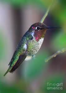 Colorful Hummingbird