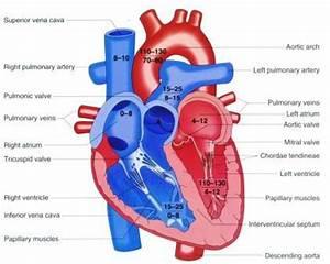 Cardiac Pressures